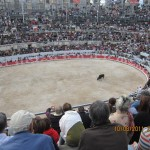 Bull Fights-The bulls live!