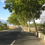 Typical Plane tree lined roads in this region of SW France.