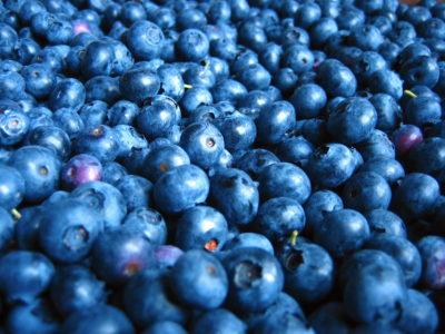 Tater Secrets & Blueberry Dreams